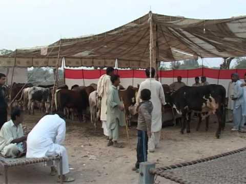 Eid-ul-Azha 2011 Preparations